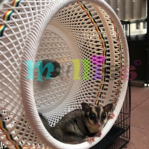 Jogging Wheel Sugar Glider
